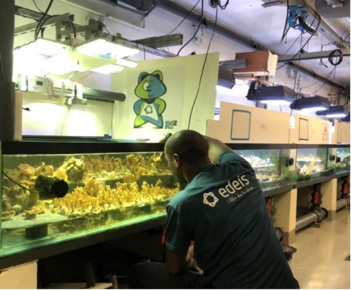 Bassins d'élevage de coraux Edeis